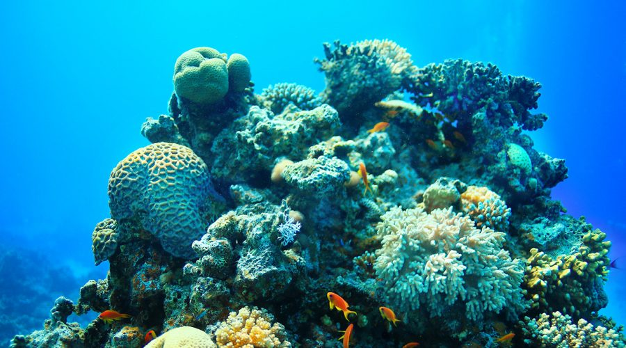 Day Trips from Aqaba - Underwater tropical sea view