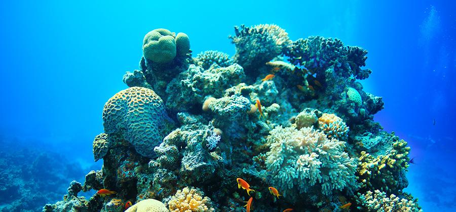 Jordan - Red Sea - Diving Snorkeling