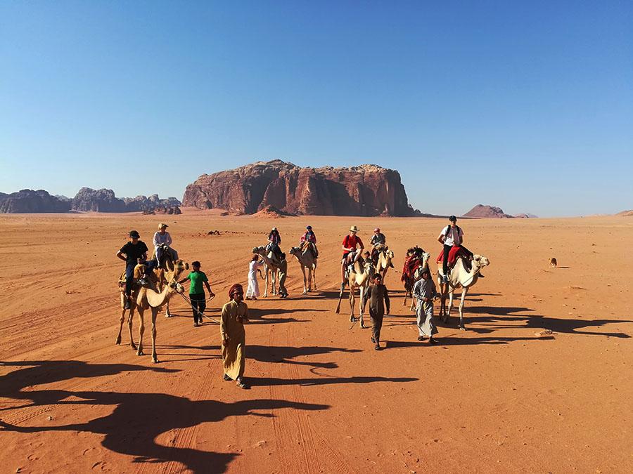 Jordan - Wadi Rum - Camels