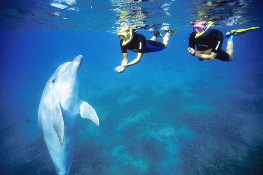 Israel - Dolphin Reef