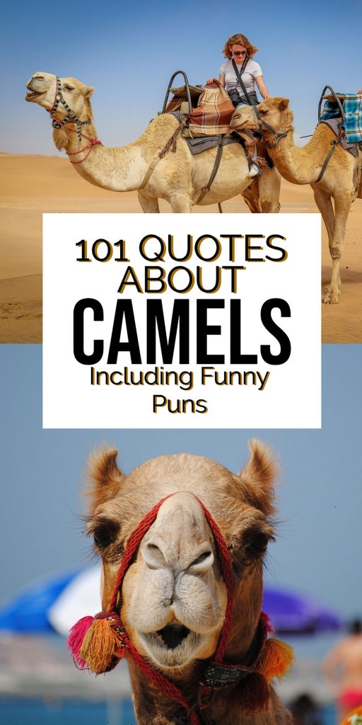 Camel Puns for Instagram