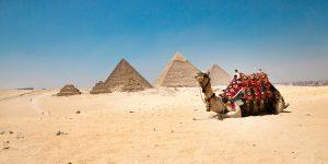 Egypt Giza Pyramids Camel.