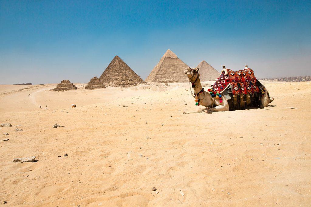 Egypt - Giza - Camel